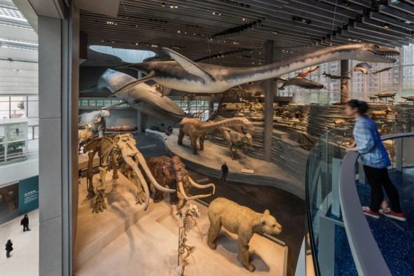 shanghai natural history museum 27