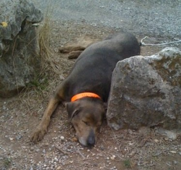 Smoke Napping After 4 Mile Hike