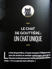 chat-noir-nathalie-semenuik-photo-12