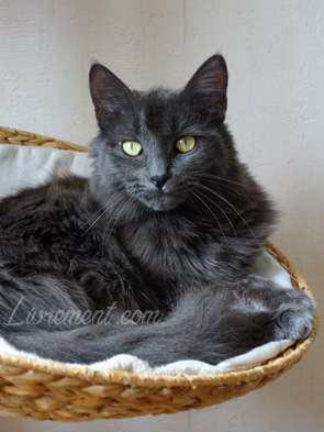 Portrait du chat Moriarty