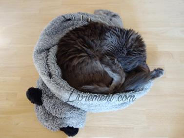 Chat endormi dans un sweat en pilou pilou