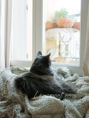 Chat regardant par la fenêtre bien installé sur son plaid