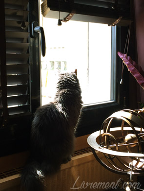 Chat qui bulle à la fenêtre