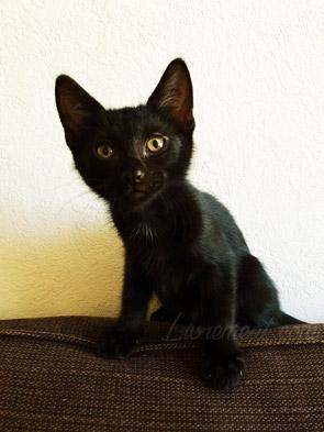Constantine, chat noir