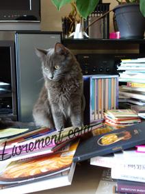 Chat Moriarty assis parmi les livres de recette