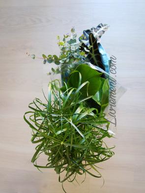 Sac de nouvelles plantes achetées