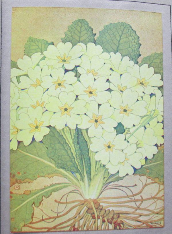 Nos fleurs