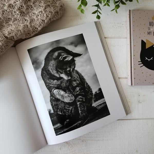 Dans l'oeil du chat - Mélani Le Bris (1)