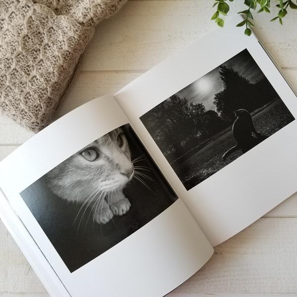 Dans l'oeil du chat - Mélani Le Bris (2)