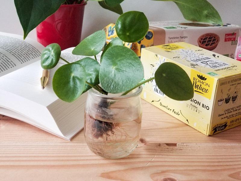 Pilea planter blog green
