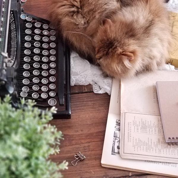 Blog littéraire et chat