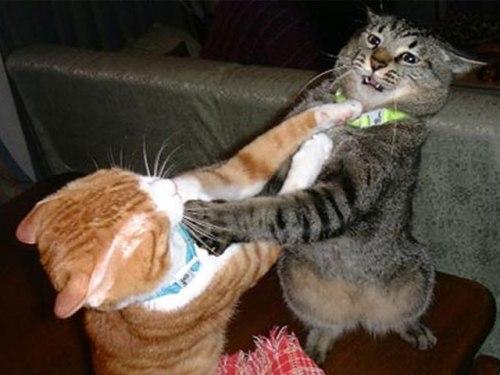 «T'aggia accire!!!» «Te mett o pesc' 'mmoc!» «E je tu chiav 'ncul a chella puttan e mammt'!»