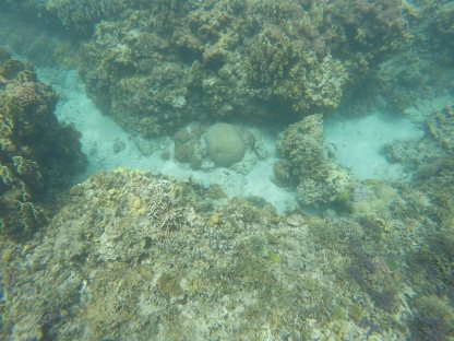 coral sea bed