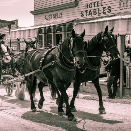 Sovereign Hill horse carriage by Liyat G Haile Photography