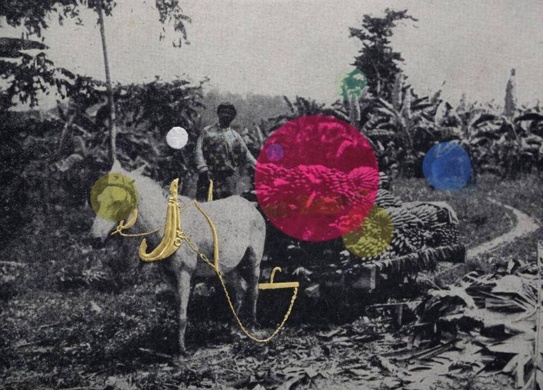 Bling Master and the Pink Bananas