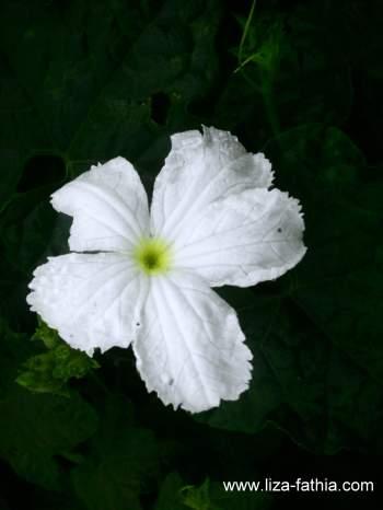 Bunga putih yang tumbuh subur di tepi jalan