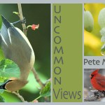 Uncommon Views, Photos by Pete Myers