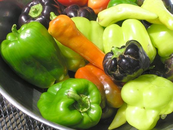 Pepper Harvest this morning
