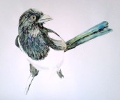 """My first magpie sketch 12"""" x 18"""""""