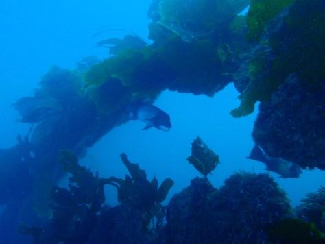 Wreck of 54' Gaff-rigged Schooner, SueJac