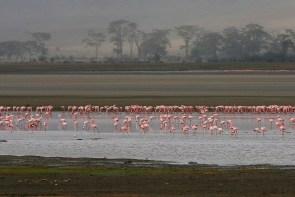 Early morning at Ngorongoro Crater, October 16, 2011.