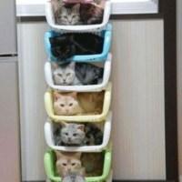 Cama de Gatos