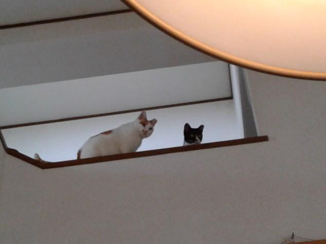 Miao-chan & Myuu-chan together!