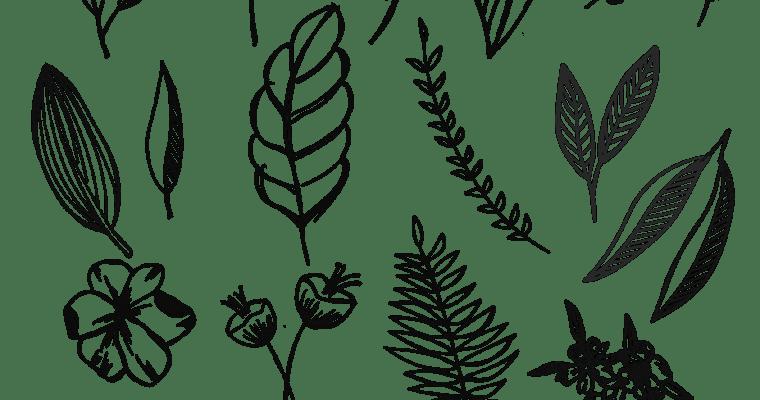 Free Botanical Drawings for Bullet Journaling