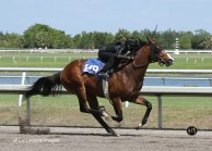 2012 Fasig Tipton Under Tack Show - Darwin at Palm Meadows