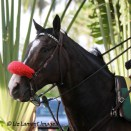 Lava Man at Gulfstream Park