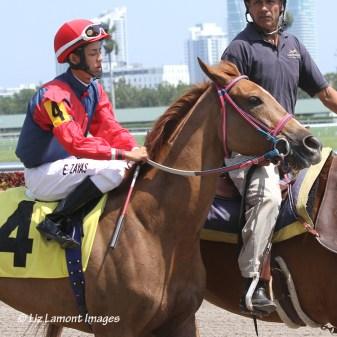 Invasora (FL) with jockey Edgard Zayas in post parade