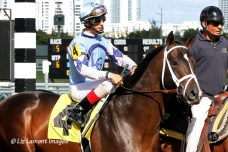 Verrazano (KY) with jockey John Velazquez in post parade at Gulfstream Park