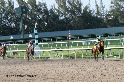Wildcat Red (FL) with Luis Saez on board wins the Quality Road Stakes by 10 1/4 lengths at Gulfstream Park.