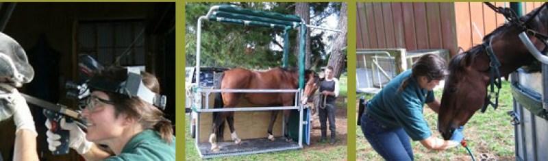 blue mist equine veterinary centre