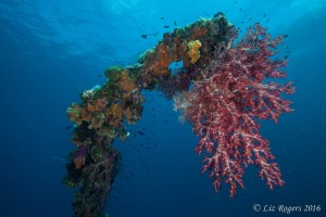 Coral growth on the Truk Lagoon shipwrecks