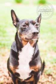 Missy Mutt Pet Photography