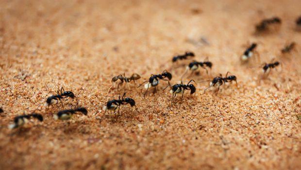 ants-620x350_620x350_81488867410