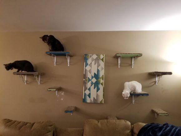 DYI cat shelves