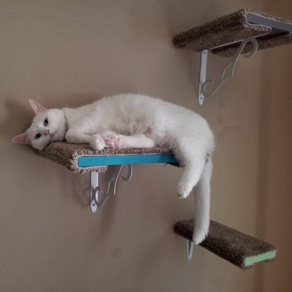 White female cat relaxing on DIY cat shelf