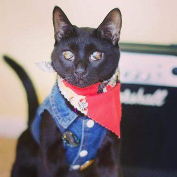 Cat in jean vest