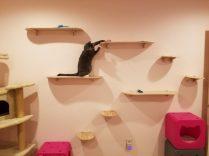 Cat climbs ContempoCat wall steps.