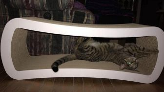 Tabby cat in scratcher.