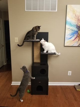 Cats on tower
