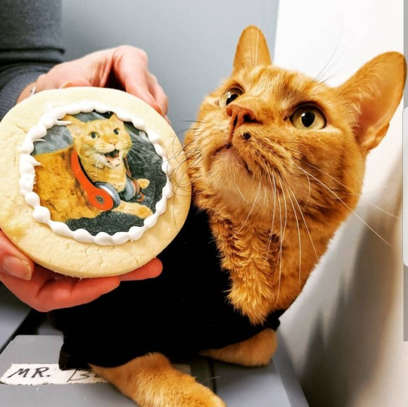 Cat with cookies