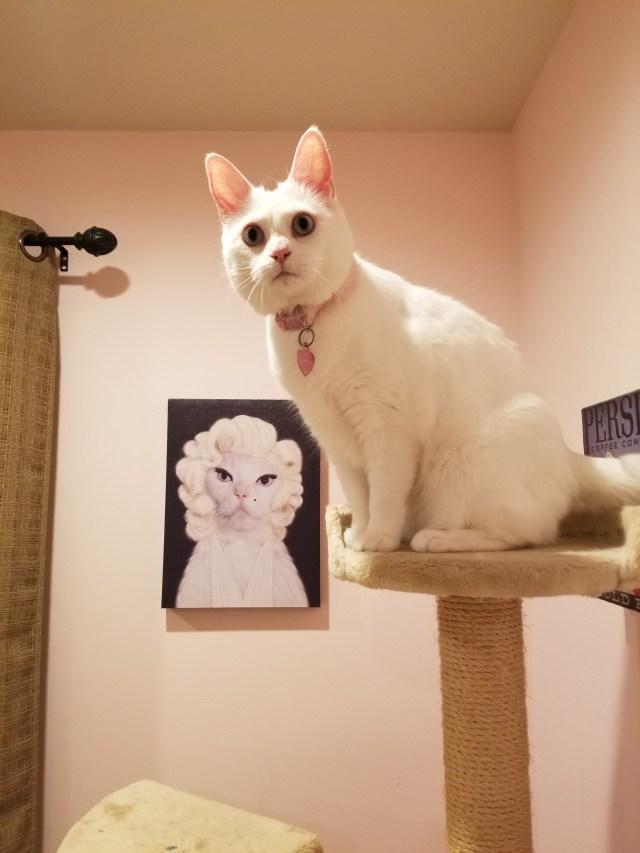 White cat on cat tree