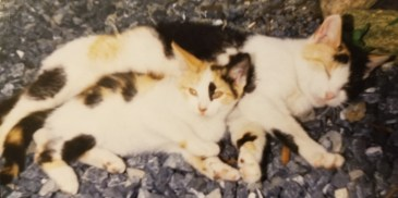 Calico cat and kitten laying together