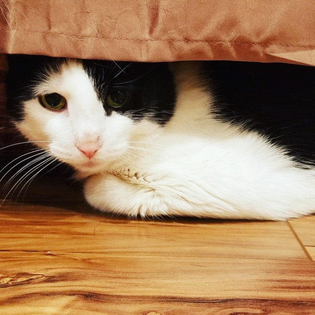 Lucy-Scared-Under-Bed.jpg