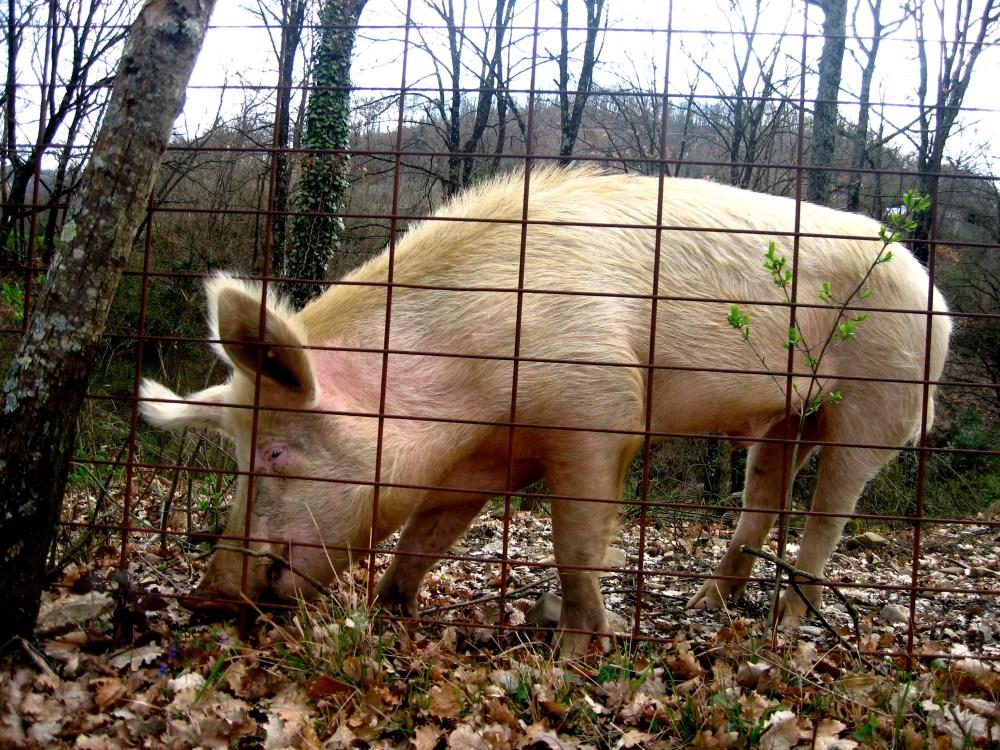 This Little Piggy... (3/5)