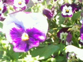 wpid-2012-03-31-09.49.24.jpg