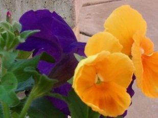 wpid-2012-03-31-09.56.48.jpg
